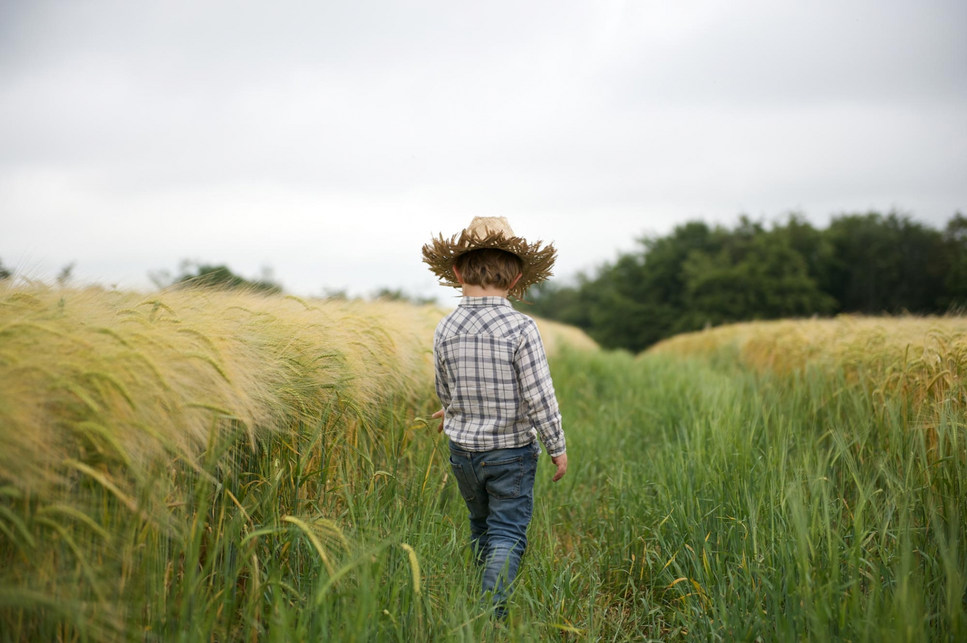 Young boy walking through a green field