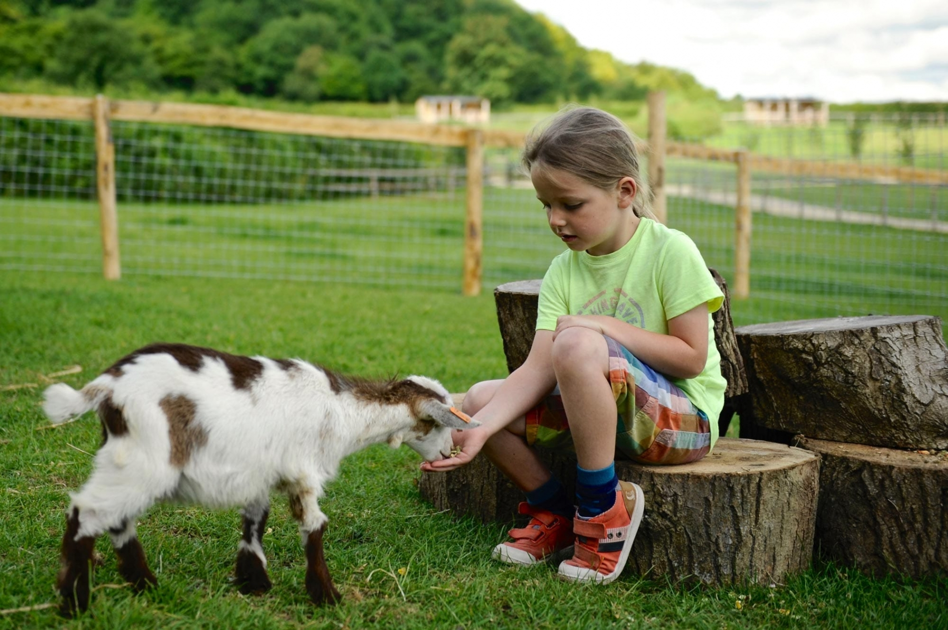 Make friends with one of the Loose Reins goats