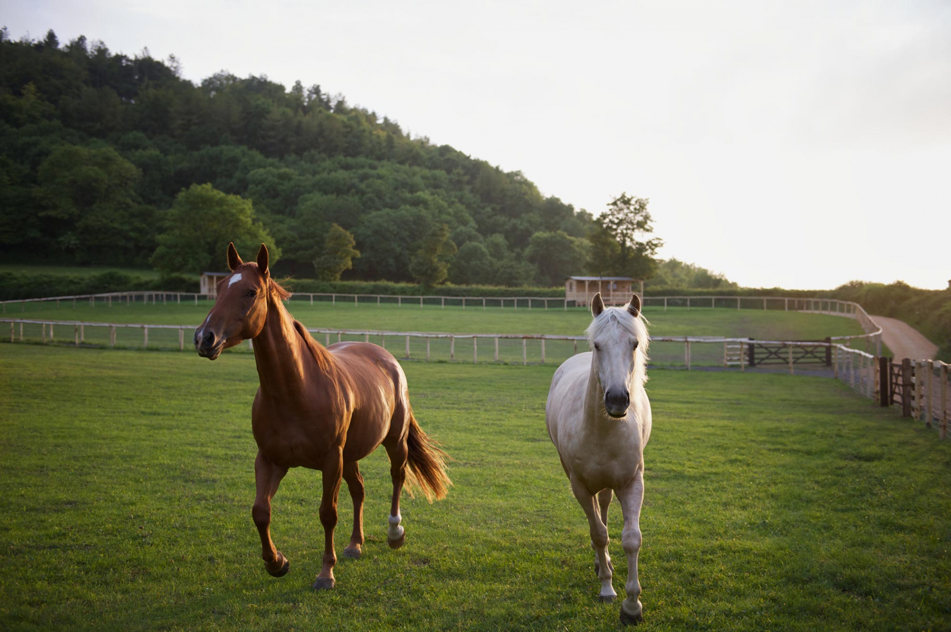Beautiful horses at play