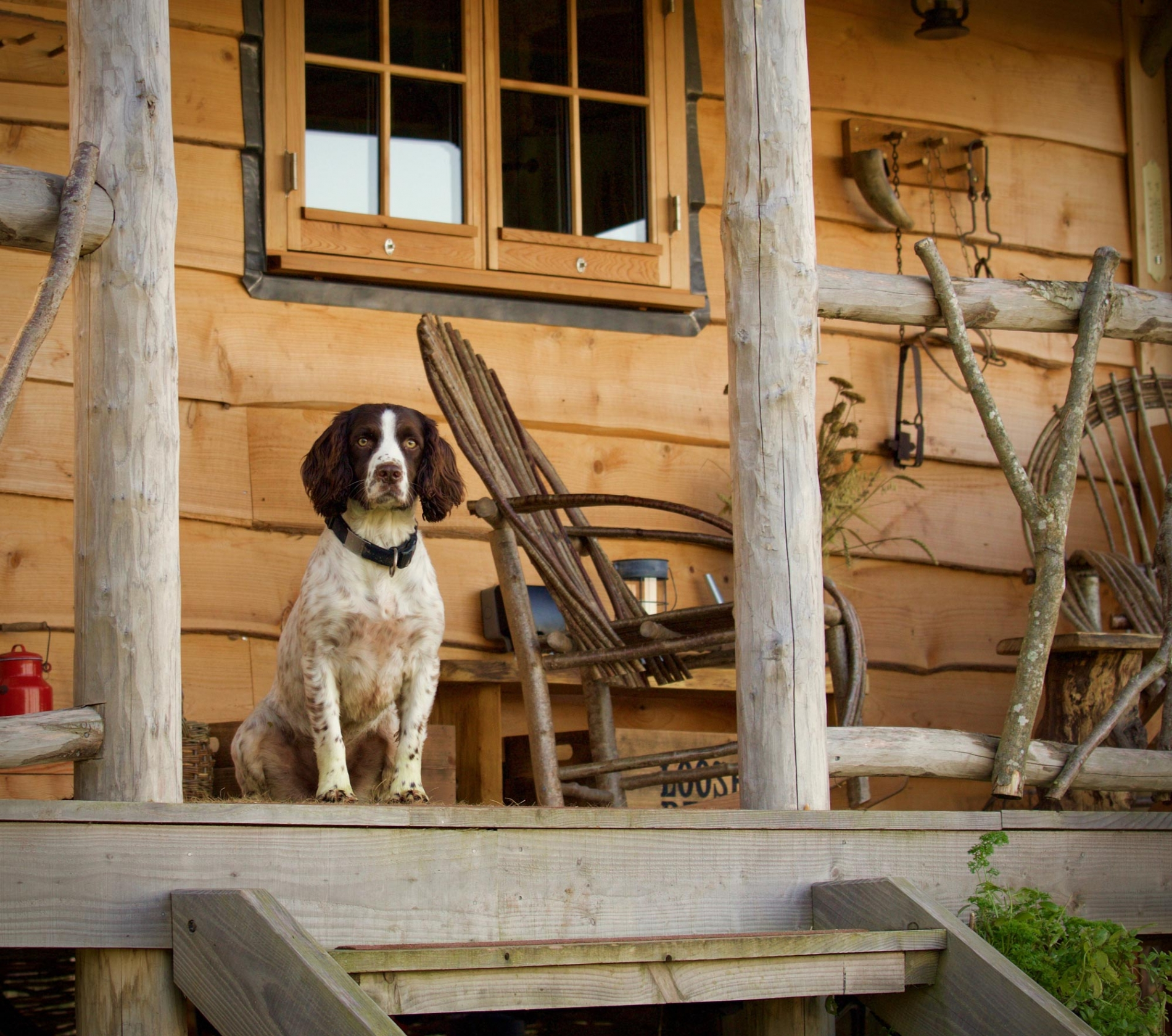 stunning dog friendly holiday lodges in dorset