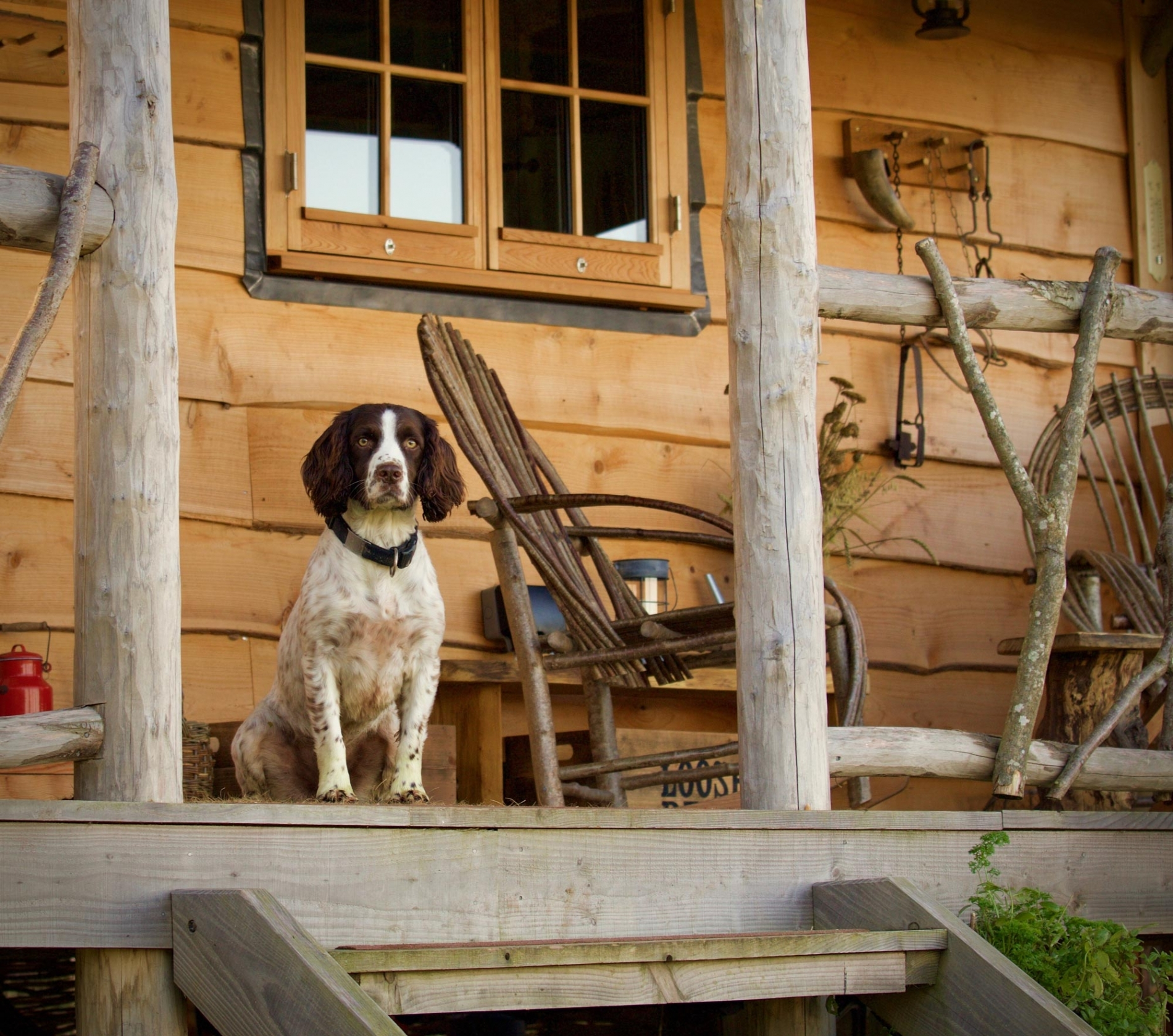 Dog Friendly Glamping Holiday Offer in Dorset England