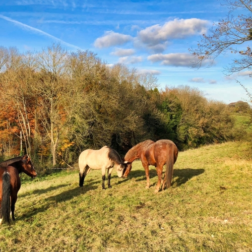 Wild Horses at Loose Reins