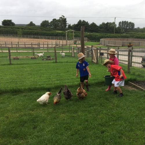 Feed the hens at Loose Reins