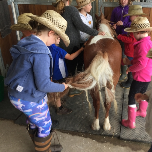 Children plaiting horse hair