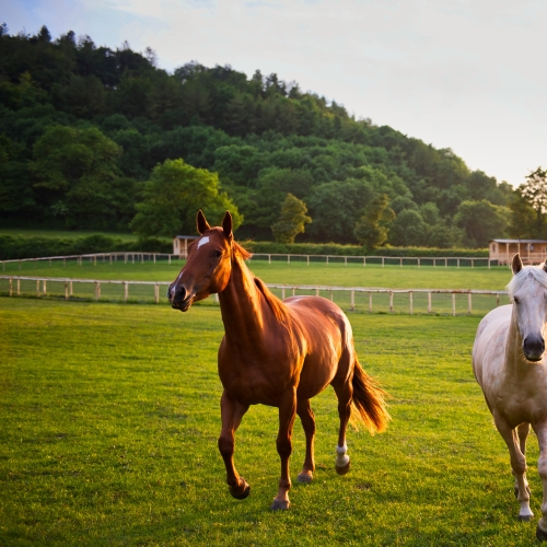 Horses in the wild at Loose Reins