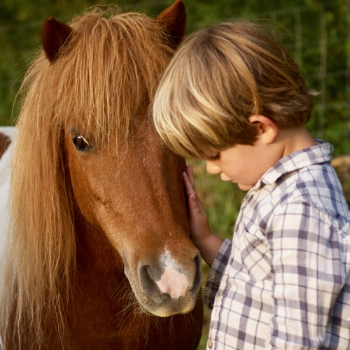 Family Friendly Horse Riding at Glamping at Loose Reins - Reconnect with nature