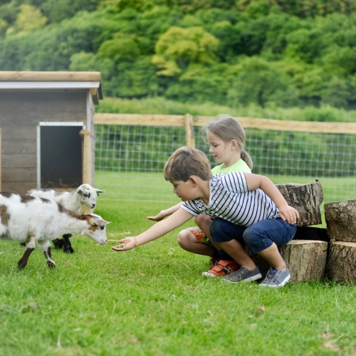 Family Friendly pygmy goats at Glamping at Loose Reins - Reconnect with nature